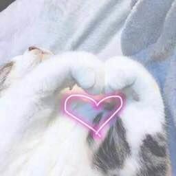 斗图爱心猫爪图3