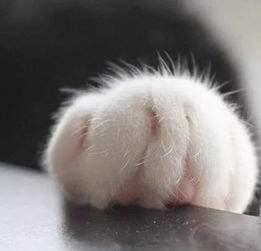斗图爱心猫爪