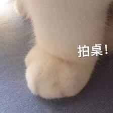 猫爪爱心表情包