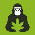 猩猩草  v1.0