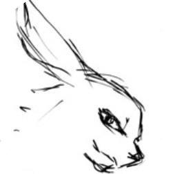兔兔漫画  v1.0.0