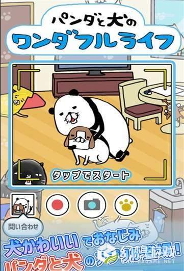 熊猫与狗狗的美好人生图4