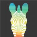 趣行斑马app