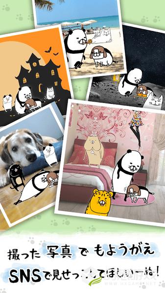 熊猫与狗狗狗一直超可爱图3