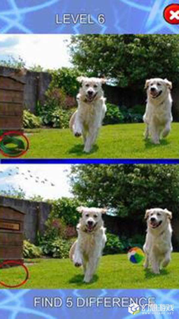 五个不同点小狗身上的斑点图2