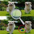 五个不同点小狗身上的斑点