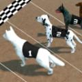 疯狂的狗比赛