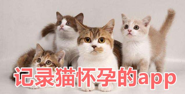 记录猫怀孕的app