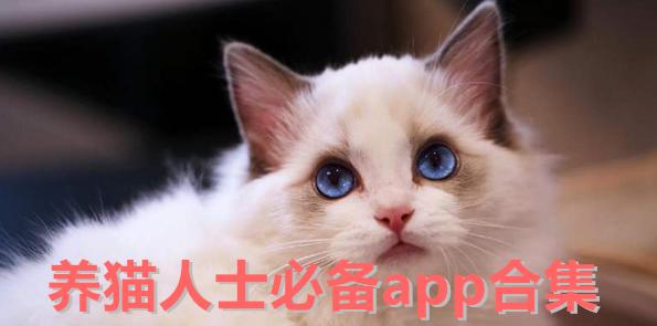 养猫人士必备app合集