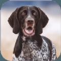 狂犬模拟器游戏安卓版